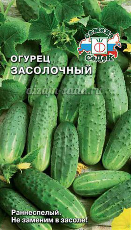 180 Graines Concombre Paris cornichon Graines de l/'Ukraine